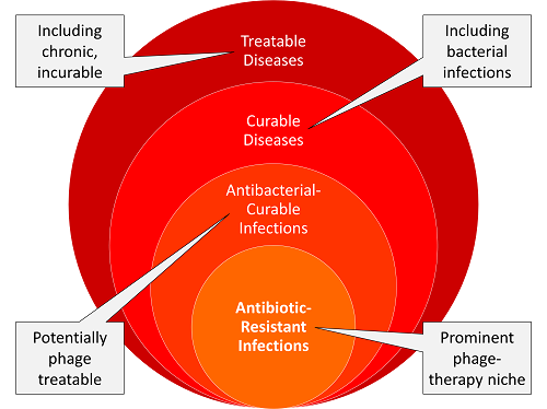 Phage therapy targets